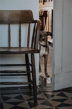 Afbeelding stoel